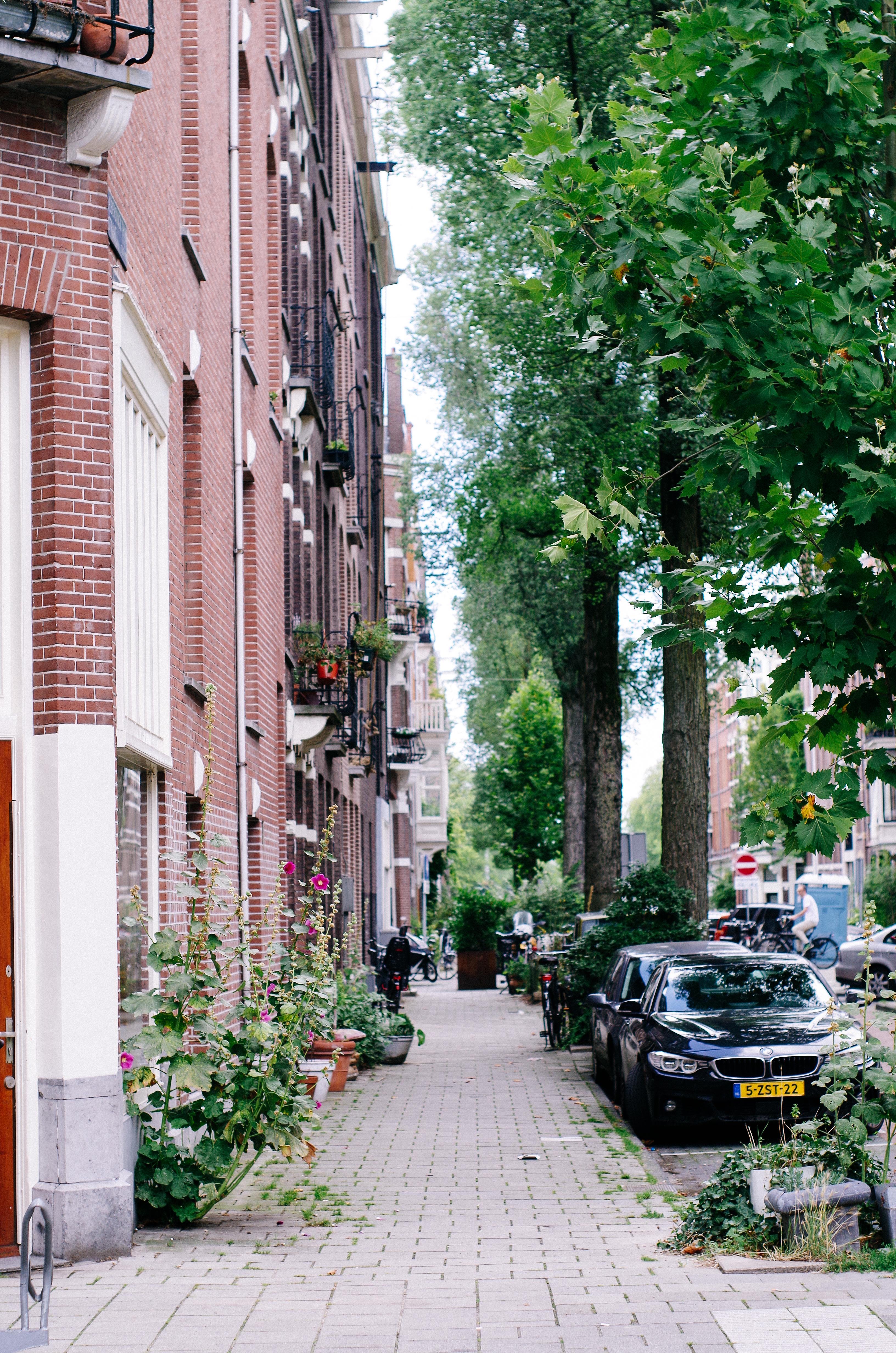 2016 AUG Amsterdam Helmersbuurt -24